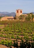 De wijngaard van de Vallei van Napa bij zonsondergang Stock Foto