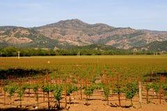 De wijngaard van de Vallei van Napa bij zonsondergang Stock Afbeeldingen