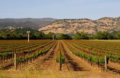 De wijngaard van de Vallei van Napa bij zonsondergang Royalty-vrije Stock Foto's