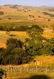 De wijngaard van de Vallei van Napa bij zonsondergang Royalty-vrije Stock Afbeelding