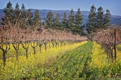 De Wijngaard van de Vallei van Napa, Californië Stock Foto