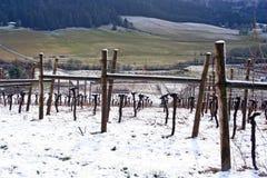 De Wijngaard van de winter Stock Foto's