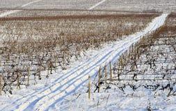 De wijngaard van de winter Stock Afbeelding