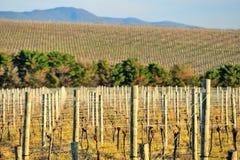 De wijngaard van de Yarravallei Stock Afbeeldingen