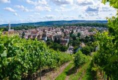 De wijngaard van de zomer Stock Foto's
