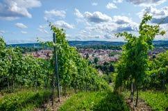 De wijngaard van de zomer Royalty-vrije Stock Afbeeldingen