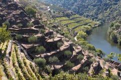 De wijngaard van Douro Stock Fotografie