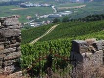 De wijngaard van Douro Royalty-vrije Stock Foto's