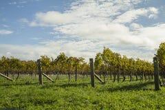 De Wijngaard van de Hawkesbaai Stock Fotografie
