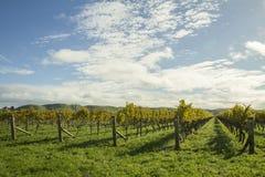 De Wijngaard van de Hawkesbaai Stock Afbeeldingen