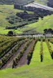 De Wijngaard van het Waihekeeiland Stock Foto