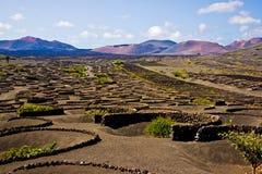 De Wijngaard van La Geria in Lanzarote Stock Foto