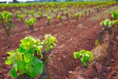 De wijngaard van La Rioja op de Manier van Heilige James stock foto's