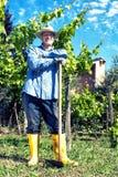 De Wijngaard van landbouwersstraw hat spade portrait break Stock Afbeelding