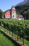 De Wijngaard van Liechtenstein Stock Afbeeldingen