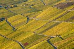 De Wijngaard van Moezel stock afbeeldingen