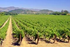 De Wijngaard van Napa Royalty-vrije Stock Afbeeldingen
