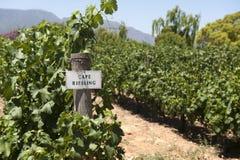 De wijngaard van Riesling van de kaap Stock Fotografie