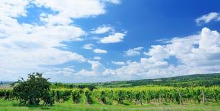 De wijngaard van Sobesmoravian Stock Afbeeldingen