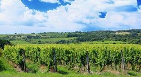 De wijngaard van Sobesmoravian Royalty-vrije Stock Foto's