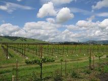 De Wijngaard van Sonoma stock afbeelding