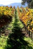 De wijngaard van Sonoma stock foto's