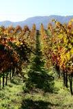 De wijngaard van Sonoma Royalty-vrije Stock Afbeeldingen