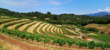 De Wijngaard van Sonoma Stock Foto