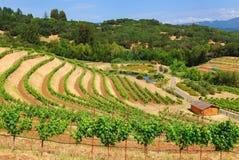 De Wijngaard van Sonoma royalty-vrije stock afbeelding