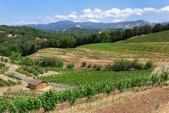 De Wijngaard van Sonoma Royalty-vrije Stock Foto