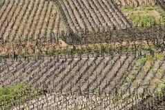 De Wijngaard van Spanje Royalty-vrije Stock Afbeelding