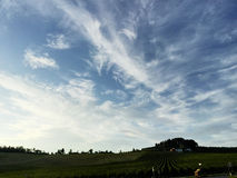 De wijngaard van Toscanië met een blauwe hemel Stock Foto