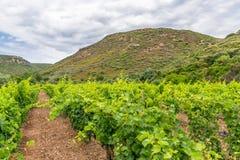De wijngaarden Royalty-vrije Stock Fotografie