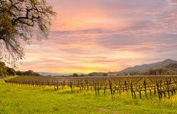 De Wijngaarden Autumn Sunrise van de Napavallei royalty-vrije stock afbeelding