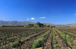 De wijngaarden in de Bonnie-vallei van het dal worden gesnoeid na het oogstseizoen in de zomer Het mooie landbouwbedrijf wordt ge royalty-vrije stock afbeelding