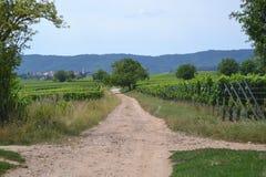 De wijngaarden in de Elzas stock fotografie