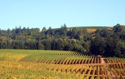 De Wijngaarden en de Bomen van de herfst Royalty-vrije Stock Foto's