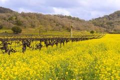 De Wijngaarden en de Mosterd het Bloeien van de Napavallei Royalty-vrije Stock Foto