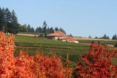 De Wijngaarden en de Wijnmakerij van de herfst Stock Afbeeldingen