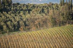 De wijngaarden en het land van Toscanië ` s in de winter, bij zonsondergang Stock Foto