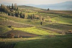 De wijngaarden en het land van Toscanië ` s in de winter, bij zonsondergang Royalty-vrije Stock Afbeelding