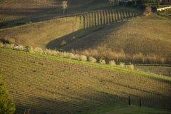 De wijngaarden en het land van Toscanië ` s in de winter, bij zonsondergang Royalty-vrije Stock Foto's