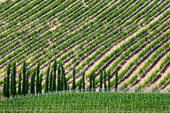 In de wijngaarden in Epanomi, Griekenland Royalty-vrije Stock Fotografie
