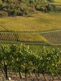 De wijngaarden van Alsacian Stock Afbeeldingen