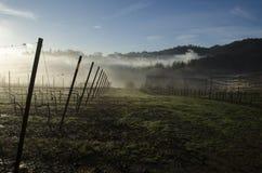 De wijngaarden van Bergamo Royalty-vrije Stock Foto's