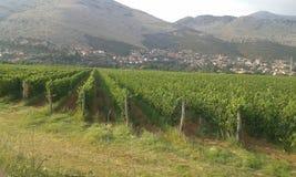 De wijngaarden van Bosnië royalty-vrije stock fotografie