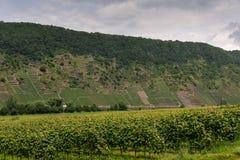 De wijngaarden van Cochem Stock Foto's