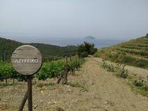 De wijngaarden van de Assyrtikowijnmakerij in Griekenland Stock Foto