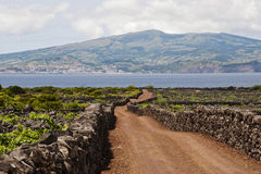 De Wijngaarden van de Azoren Royalty-vrije Stock Foto's