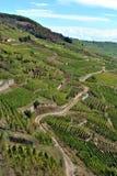 De wijngaarden van de Elzas Royalty-vrije Stock Foto